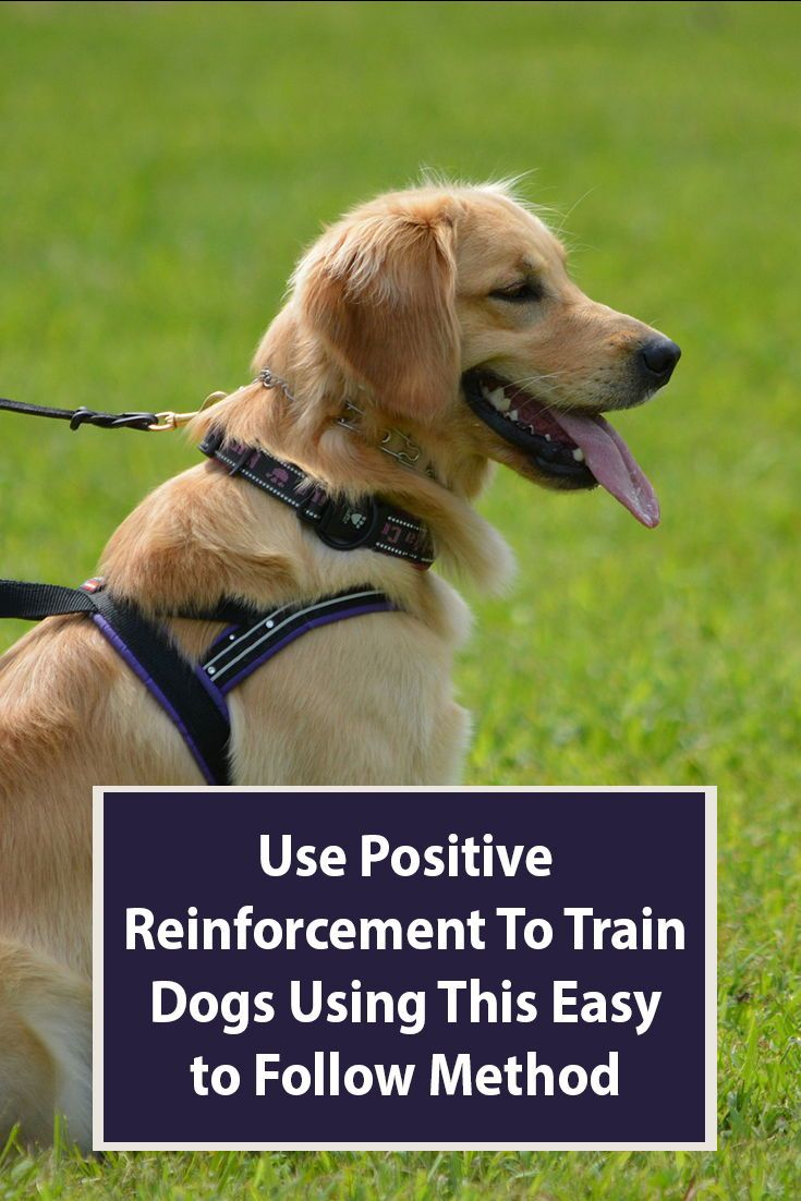 Learn To Use Positive Reinforcement To Train Your Dog Dog