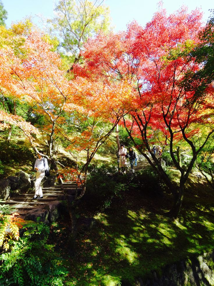 東福寺 - Tofukuji Temple