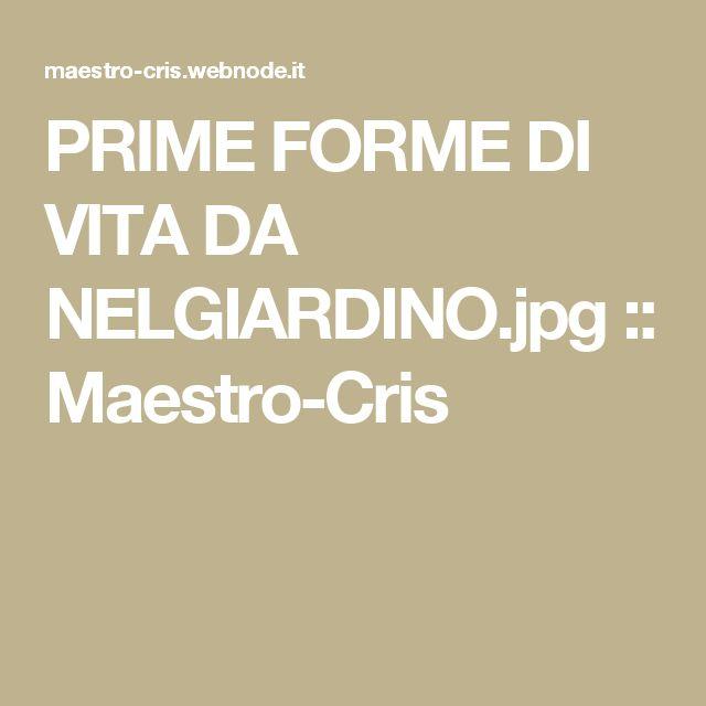 PRIME FORME DI VITA DA NELGIARDINO.jpg :: Maestro-Cris