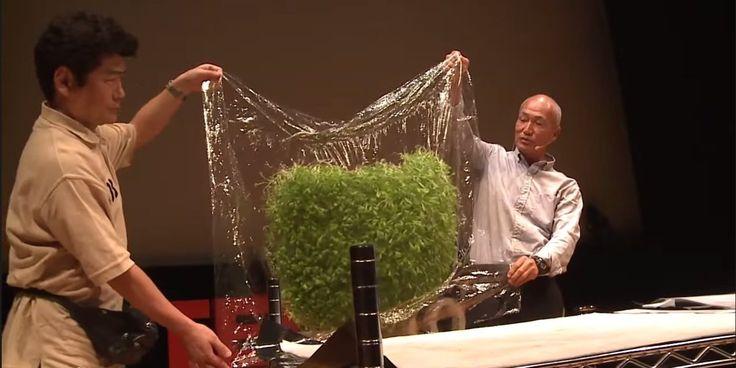 地面がなくても野菜が育つ! とある日本企業が開発した「魔法のフィルム」がハンパない