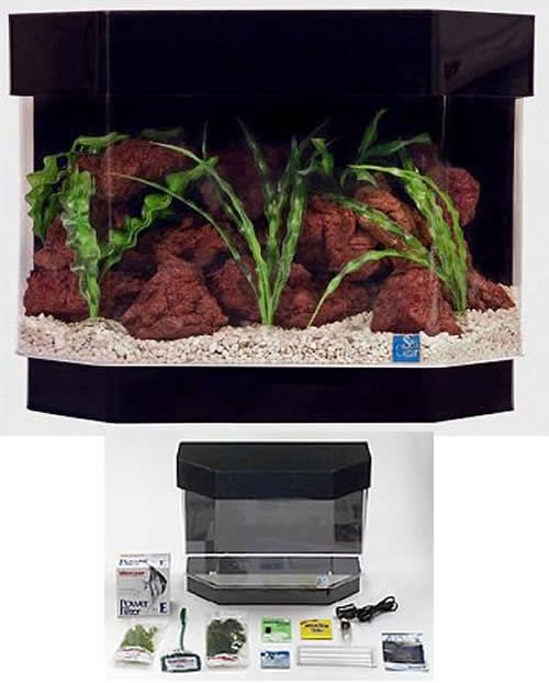The 25 best hexagon fish tank ideas on pinterest fish for Hexagon fish tank lid