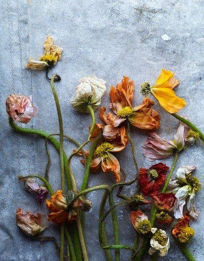 Judy Casey - Photographers - Penny De Los Santos - Still Life