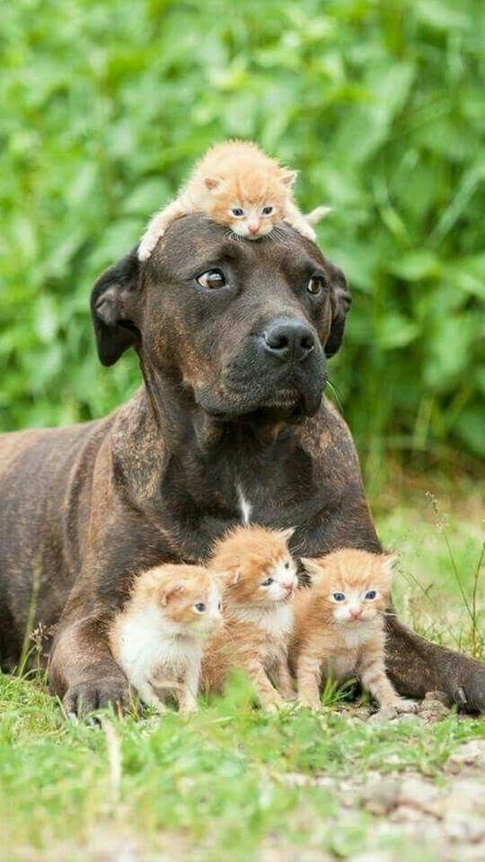 приемные семьи животных фото получить