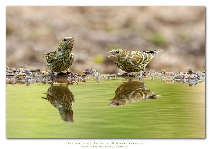 Vroege Vogels: Jong stel