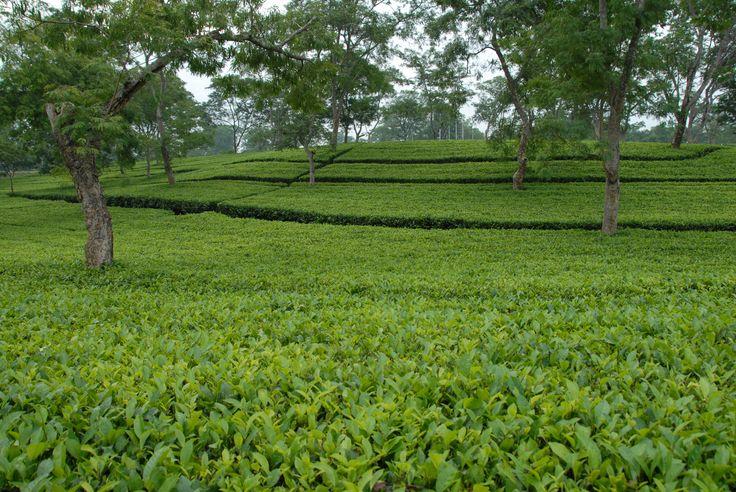 garden scene1