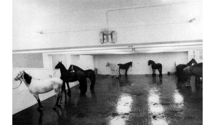 Jannis Kounellis, Dodici cavalli vivi, a L'Attico di via Beccaria, 1969