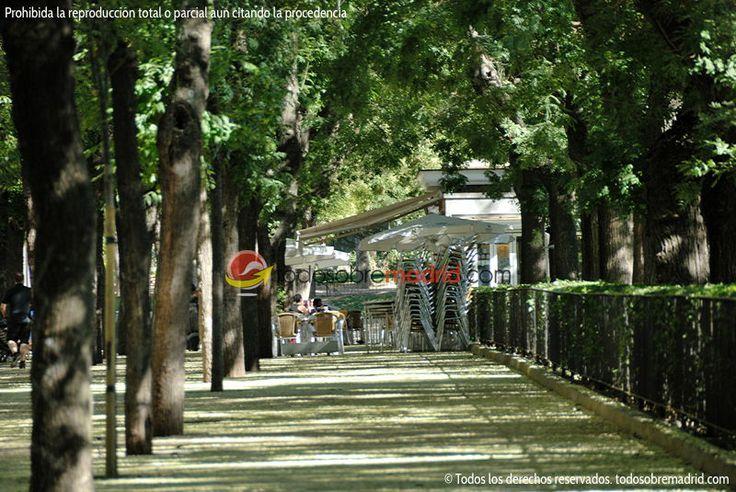 El paseo de pintor rosales terrazas madrid madrid for Terrazas nocturnas madrid