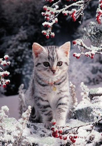 Watch Cats Walking In The Snow For The First Time [VIDEO