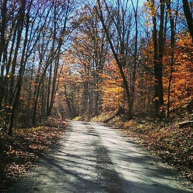 Dirt Road in Fall