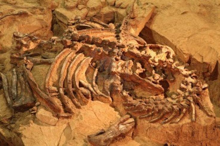 fossili di dinosauro