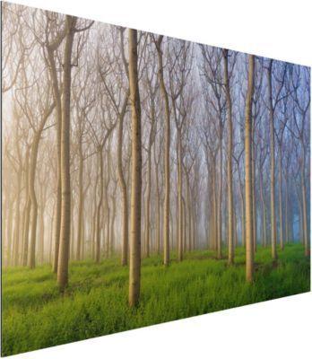 Alu Dibond Bild - Morgen im Wald - Quer 2:3 50x75-22.00-PP-ADB-WH Jetzt bestellen unter: https://moebel.ladendirekt.de/dekoration/bilder-und-rahmen/bilder/?uid=1daa419c-f3b7-5559-b944-799d02d438a7&utm_source=pinterest&utm_medium=pin&utm_campaign=boards #heim #bilder #rahmen #dekoration