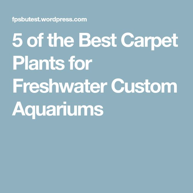 5 of the Best Carpet Plants for Freshwater Custom Aquariums