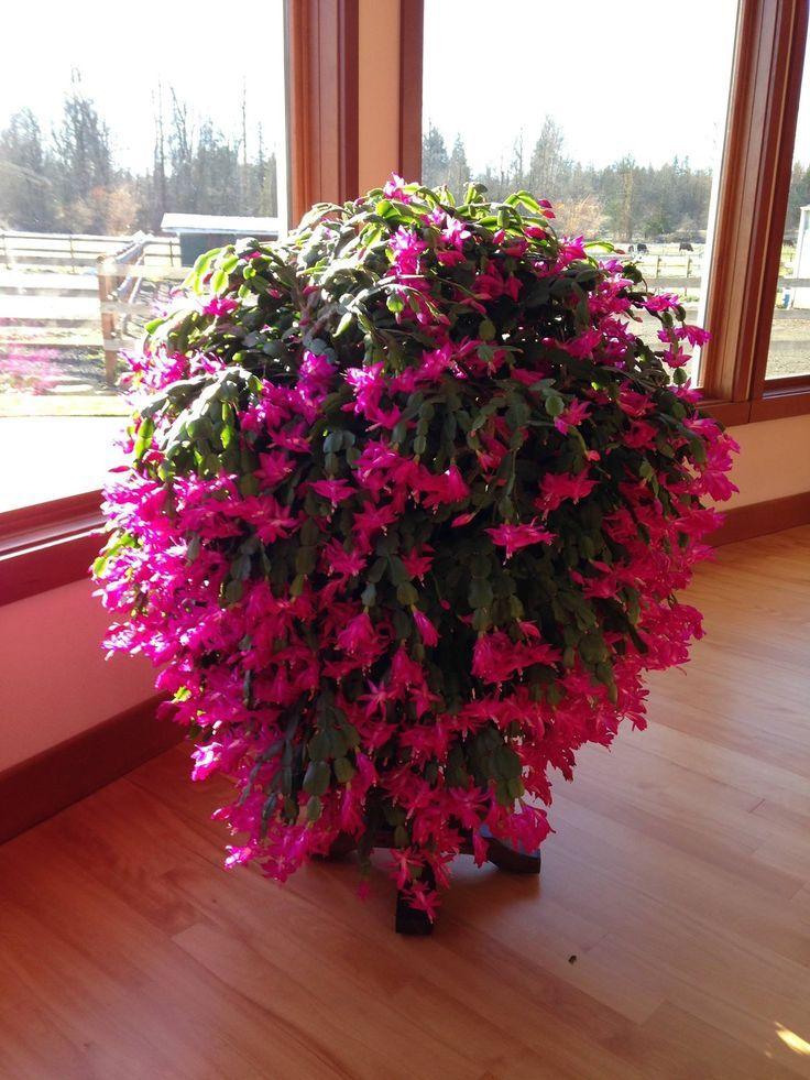 Beautiful! Plants, Flower garden plants, Planting flowers