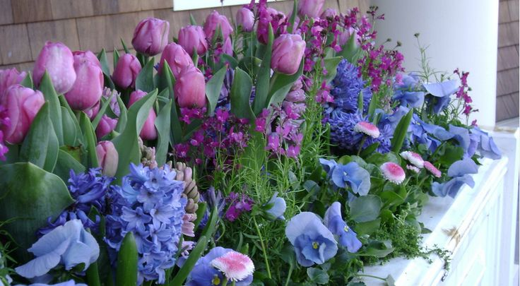 Terasz éke tavasszal ez a beültetett növény csoport