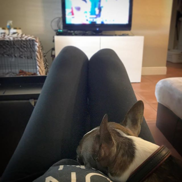 Papa's at Dolphins game in Miami. Watching the game on TV with mama & her growing belly at home.  #GoPhins 🐬  #nanamianewman #bostonterrier #terrier #mansbestfriend #floridian #floridadog #florida #southflorida #doglife #bostonterriersofinstagram #boston #dog #dogsofinstagram #instadog #lovedogs #brindleboston #brindlebostonterrier #pet #brindle #southfloridadogs #southflorida #doglife #woof #bostonterrier_feature #ボストンテリア#愛犬#犬#フロリダ #アメリカ