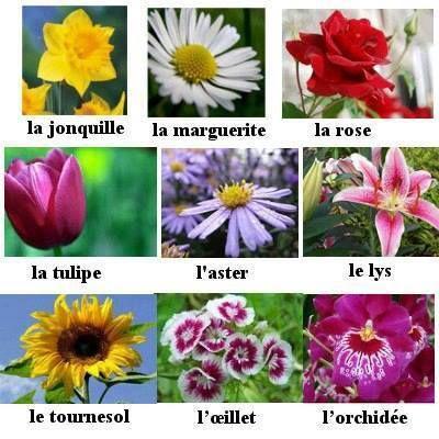 https://s-media-cache-ak0.pinimg.com/736x/84/1c/58/841c58a4f739f4c5951bbc23689b5294--core-french-french-classroom.jpg