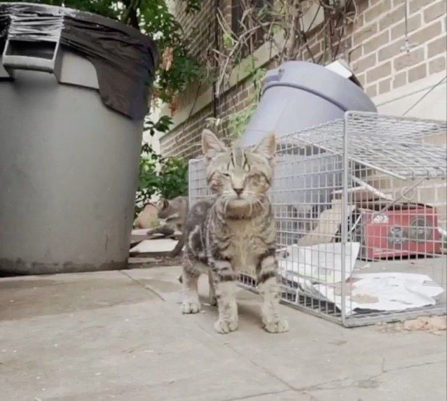 A Couple From Brooklyn New York Came Across A Sickly Little Kitten