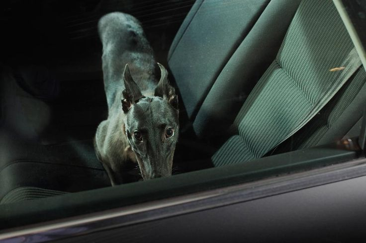 Wait for Me: Dogs Left Alone in Cars in Martin Usborne's Project — British photographer Martin Usborne made a photo series about the fear and loneliness of dogs that have been left in cars by their owners.Related Posts