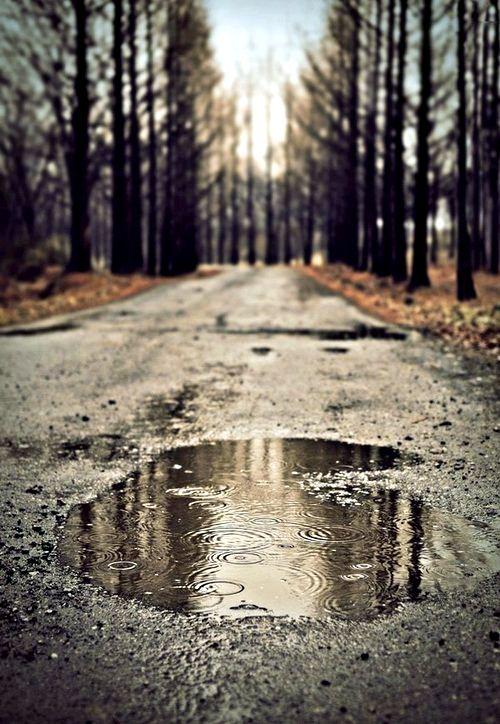 Autumn puddle -- Serendipitous Wanderings