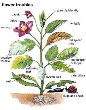 what is wrong with your garden plant common garden pests