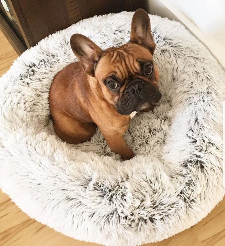 Luxury Calming Cuddler Bed PawThread Dog bed, Pets