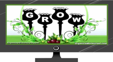 Grow Poppies (FULL Version) Great Blog on all things Poppy does   Videos - Tutorials - Photos - Discussion - Q & A about Growing, obtaining, viable Poppy seeds (the legal ones). Papaver #Somniferum Poppy   viable #Seeds via #OrganicalBotanicals  #poppies    Framed Poppy #Prints on everything from Posters & Wall Art, to Mens & Women's Clothing, T-shirts, Apparel, Home Decor, Framed, even on Canvas and Embroidery on anything. Hats, caps, Custom Cell phone cases, etc.