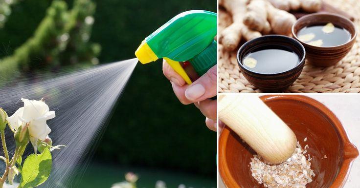 Aprende a realizar de manera natural y ecológica pesticidas, herbicidas y abonos para cuidar tu huerto o jardín.