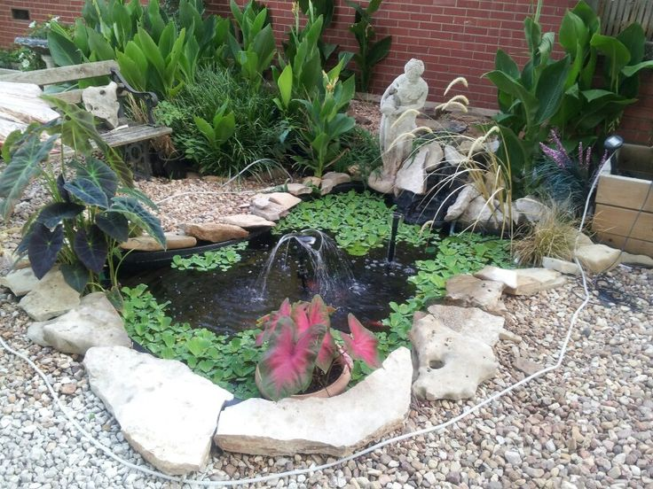 Goldfish pond I made.