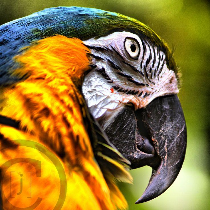 Google képkeresési találat: http://jillvorbeckphotos.files.wordpress.com/2010/09/100813hdr.jpg