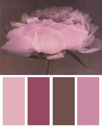 Pink Color Palette inspired by Jolie, Art Print by Erin Clark