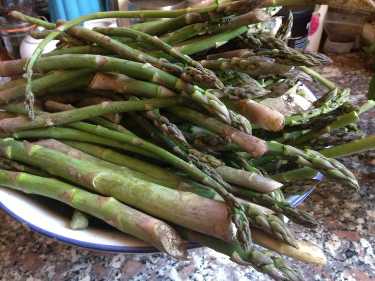 Italy Food Roots goes asparagus picking!