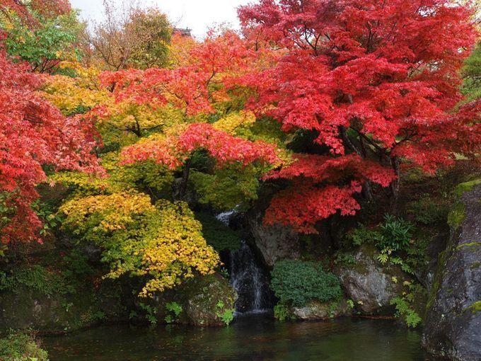 「箱根美術館」の紅葉