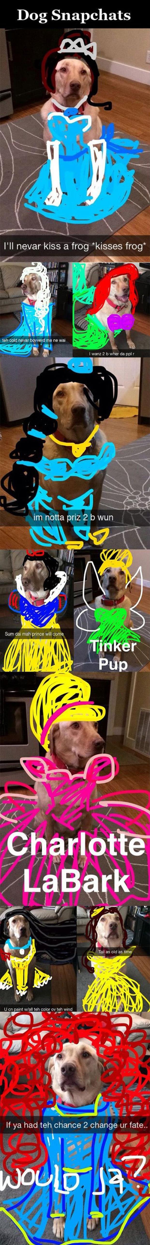 Images of the week, 55 pics. Dog Snapchats