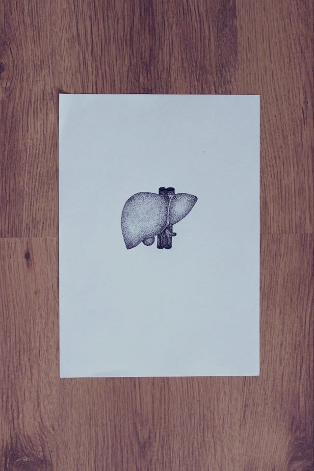 liver dotwork anatomy