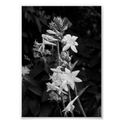 Dramatic Flowers B&W Floral Poster - photography picture cyo special diy
