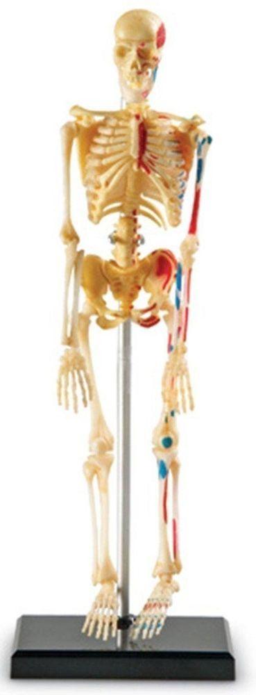 Educational Toys For Kids Learning Resources Skeleton Model Children Doctor Toy #EducationalToysFor
