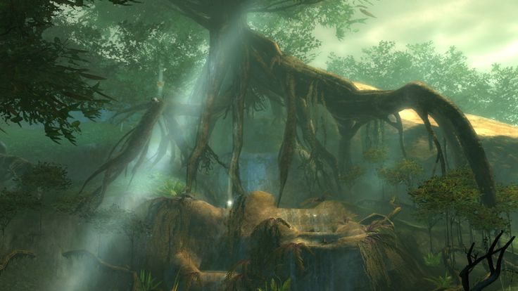 La jungle de #Maguuma #GW2