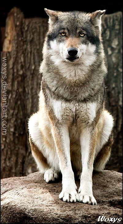 180 best Dogs images on Pinterest | Animals dog, Dog ...