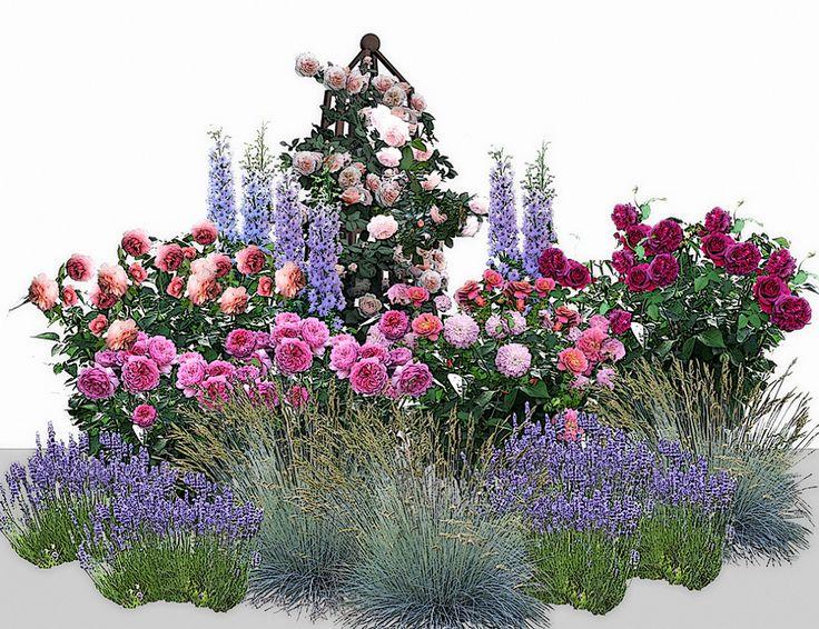 1.Роза Jubilee Celebration- — 2 шт. 2.Princess Alexandra Of of Kent — -2 шт. 3.Роза A Shropshire Lad — -1 шт. 4.Роза Christopher Marlowe — -1 шт. 5.Роза William Shakespeare 2000 — - 1 шт. 6.Дельфиниум гибридный — -3 шт. 7.Лаванда — -3 шт. 8.Овсяница сизая — – 3шт.