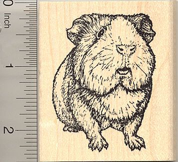 Image result for guinea pig rubber stamps