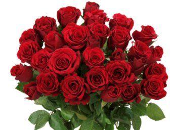 """Blume Ideal: 33 rote Rosen für 20,98 Euro frei Haus https://www.discountfan.de/artikel/technik_und_haushalt/blume-ideal-33-rote-rosen-fuer-2098-euro-frei-haus.php Ein Rosenstrauß zu Nikolaus: Bei """"Blume Ideal"""" ist jetzt ein Strauß mit 33 langstieligen Rosen für 20,98 Euro frei Haus zu haben – die Lieferung ist bis zum 12. Dezember 2017 möglich. Blume Ideal: 33 rote Rosen für 20,98 Euro frei Haus (Bild: Blumeideal.de) Die 33 roten Rosen... #Blumen, #"""