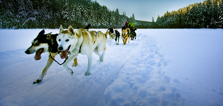 """Dog Sledding in Canada The """"cottage country"""" of Ontario, Canada...dog sledding and cross country skiing!"""
