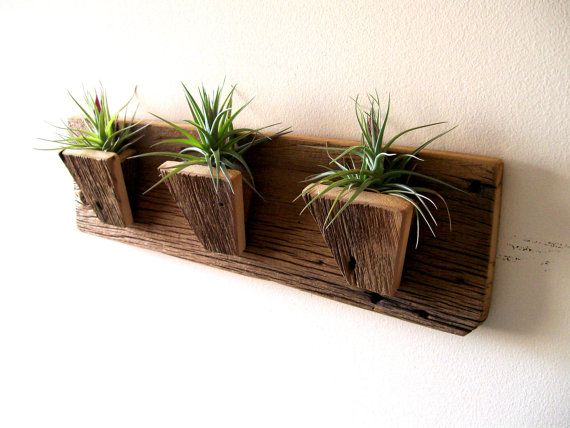Delightful Air Plant Holder Planters Tillandsia Air Plants Reclaimed Barn Wood Rustic  Wall Hanging Plants Included