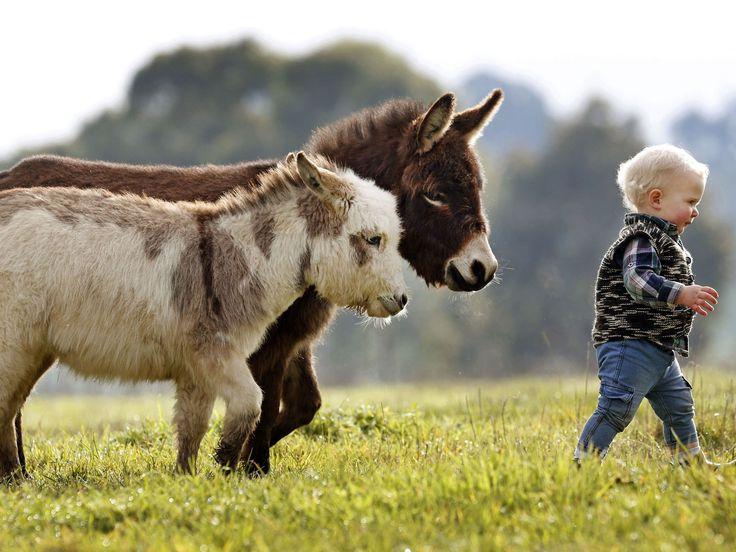 Filhotes fofos são destaque do mês | Donkeys | Animais ...