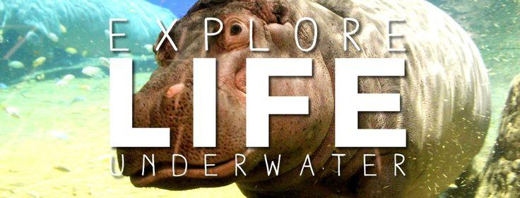 Adventure Aquarium, Camden, NJ - right near Philly!