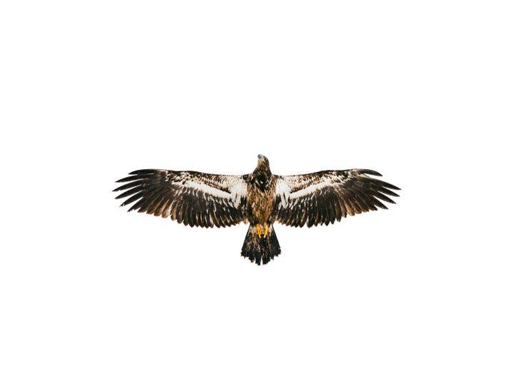 Eagle Welcome - Corey Arnold