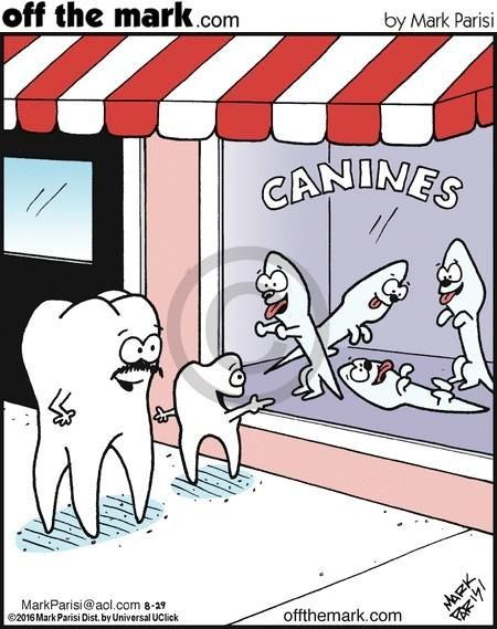 Dentaltown - ca·nine ˈkāˌnīn noun plural noun: canines 1. a dog. 2. a pointed tooth between the incisors and premolars of a mammal, often greatly enlarged in carnivores.
