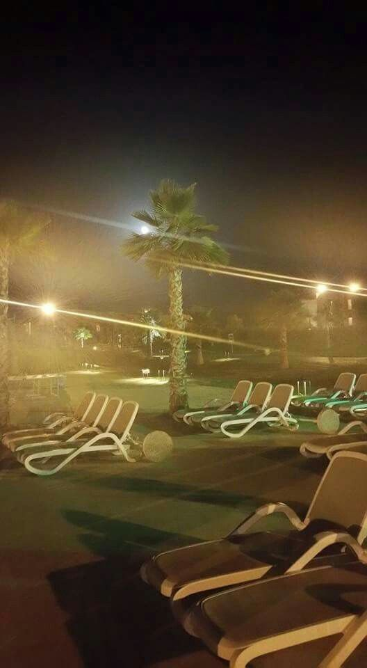 Moon through the palm tree