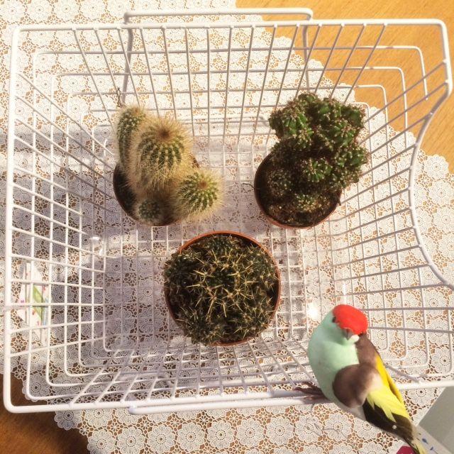 Fleur je tafels en kasten op met deze super leuke mandjes, cactussen, vogeltjes en tafelzeil!
