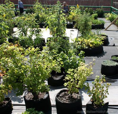 Wonderful Rooftop Smart Pot Garden... QuebecContainer GardeningEditorialRooftopsHobby  ...